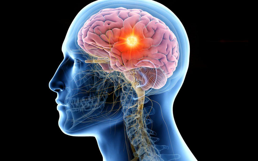 brain visual